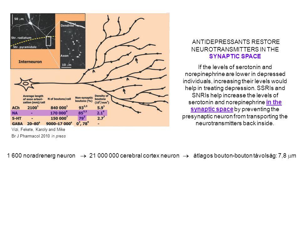 """szinaptikus rendszernem-szinaptikus rendszer """"Mit ? """"Hogyan ? (érzékelés, motoros funkciók, stb) (érzelmi töltet, figyelem, motiváció, stb) 1 600 noradrenerg neuron  21 000 000 cerebral cortex neuron  átlagos bouton-bouton távolság: 7,8  m 85% nem-szinaptikus 170 000 bouton / neuron ms ms – s – min Digitális Analóg Glutamate NA5-HT szinaptikus rendszernem-szinaptikus rendszer """"Mit ? """"Hogyan ?"""