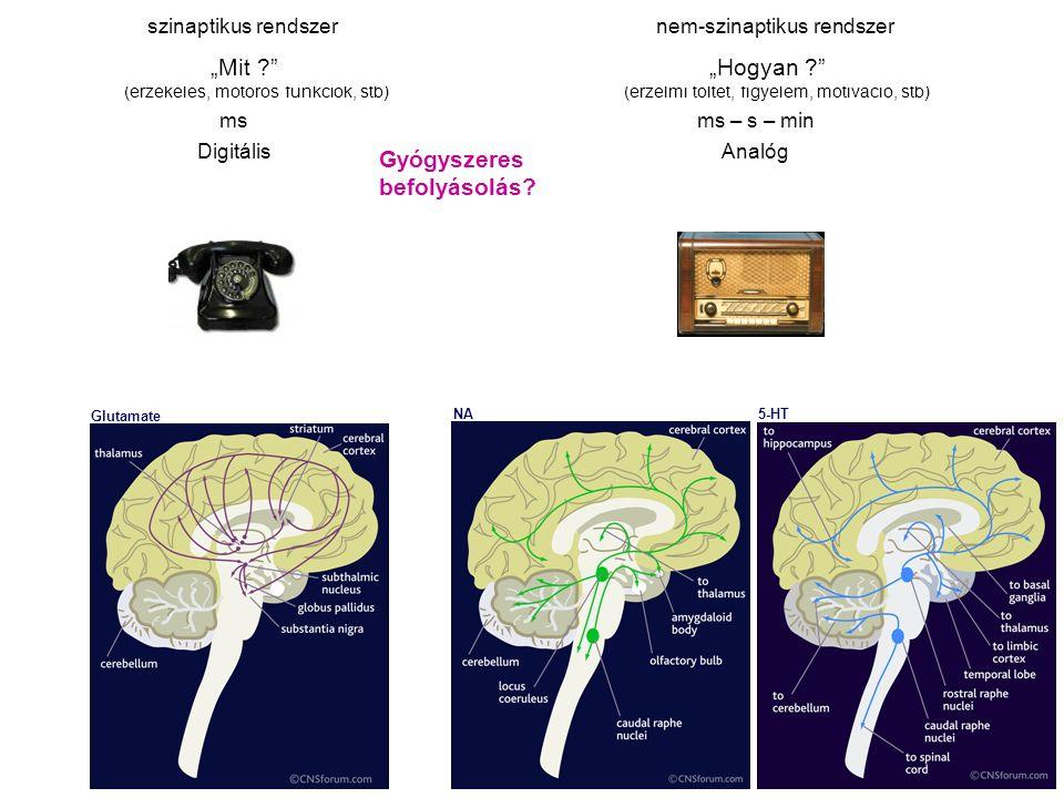 """szinaptikus rendszernem-szinaptikus rendszer """"Mit ?"""" """"Hogyan ?"""" (érzékelés, motoros funkciók, stb) (érzelmi töltet, figyelem, motiváció, stb) ms ms –"""