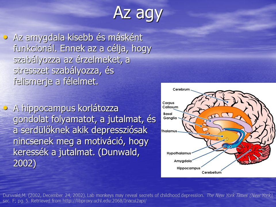 Az agy Az amygdala kisebb és másként funkcionál.