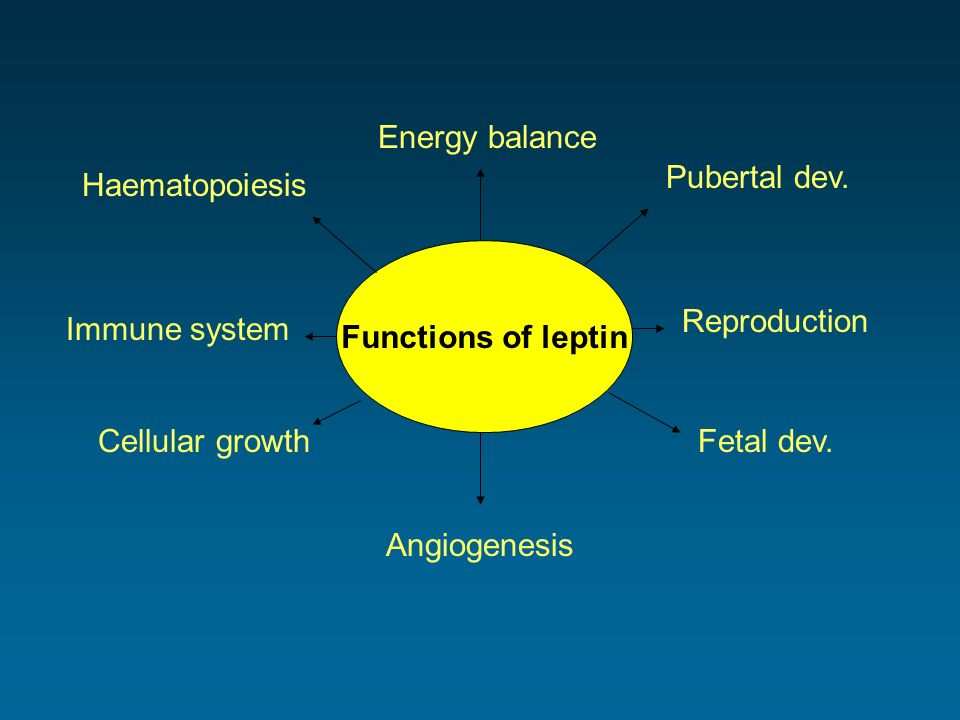 Functions of leptin Energy balance Pubertal dev. Reproduction Fetal dev. Angiogenesis Cellular growth Immune system Haematopoiesis