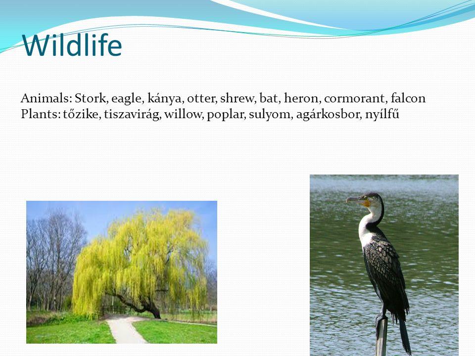 Wildlife Animals: Stork, eagle, kánya, otter, shrew, bat, heron, cormorant, falcon Plants: tőzike, tiszavirág, willow, poplar, sulyom, agárkosbor, nyílfű