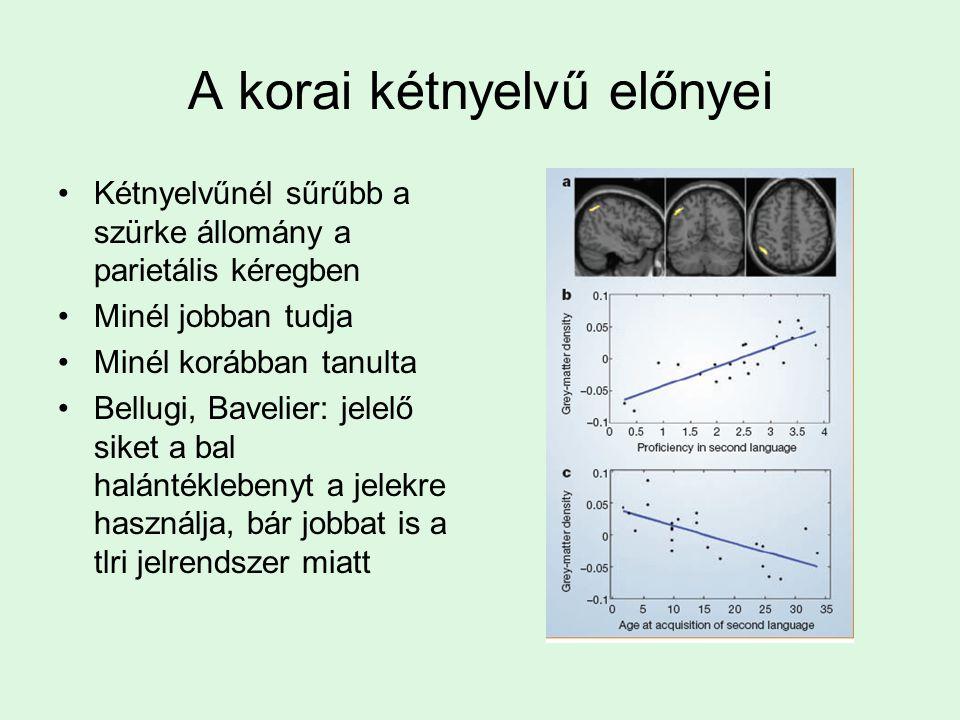 Felülről-lefelé hatások a hangok feldolgozásában Hosszabb szegmens: könnyebben felismerhető Ugyanaz a k hang szóban (kalap) könnyebben észlelhető Broa