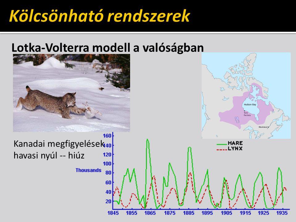 Lotka-Volterra modell a valóságban Kanadai megfigyelések havasi nyúl -- hiúz