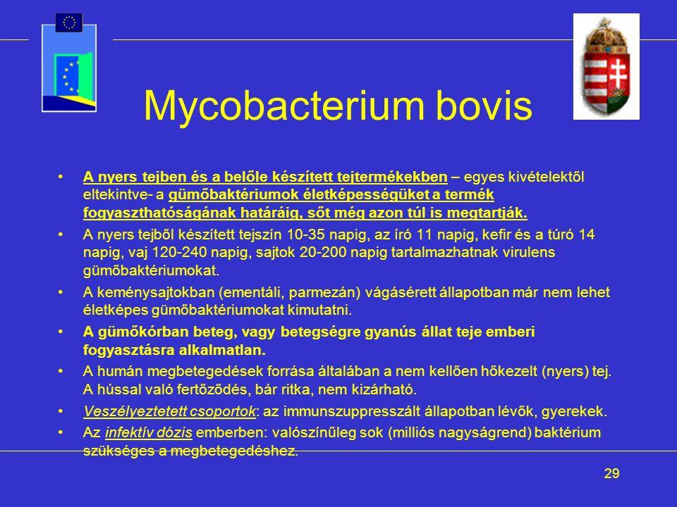 29 Mycobacterium bovis A nyers tejben és a belőle készített tejtermékekben – egyes kivételektől eltekintve- a gümőbaktériumok életképességüket a termék fogyaszthatóságának határáig, sőt még azon túl is megtartják.