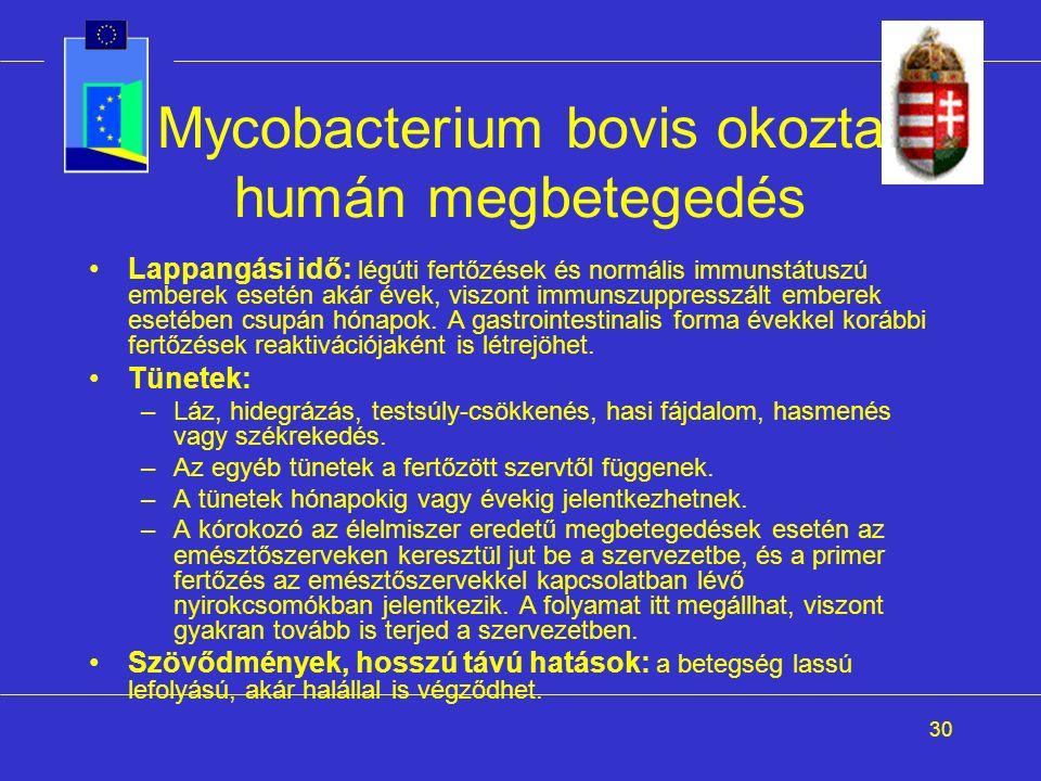 30 Mycobacterium bovis okozta humán megbetegedés Lappangási idő: légúti fertőzések és normális immunstátuszú emberek esetén akár évek, viszont immunszuppresszált emberek esetében csupán hónapok.