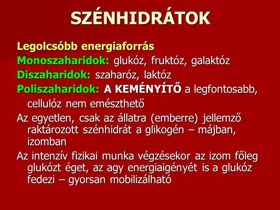 SZÉNHIDRÁTOK Legolcsóbb energiaforrás Monoszaharidok: glukóz, fruktóz, galaktóz Diszaharidok: szaharóz, laktóz Poliszaharidok: A KEMÉNYÍTŐ a legfontosabb, cellulóz nem emészthető Az egyetlen, csak az állatra (emberre) jellemző raktározott szénhidrát a glikogén – májban, izomban Az intenzív fizikai munka végzésekor az izom főleg glukózt éget, az agy energiaigényét is a glukóz fedezi – gyorsan mobilizálható