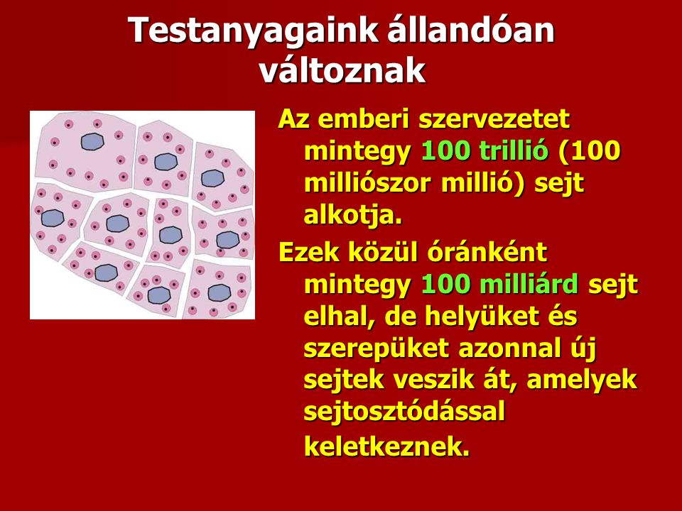 Tápanyagból saját anyag A szervezet működésének alapja a táplálkozás A szervezetbe kerülő legtöbb tápanyagot először le kell bontani egyszerűbb építő kövekre  majd ezekből újra fel kell építeni, szintetizálni kell a bonyolultabb, csak az emberi szervezetre jellemző molekulákat Ezek a vér, illetve a szövetek közötti folyadék közvetítésével jutnak el a végfelhasználás helyére, a sejtekbe