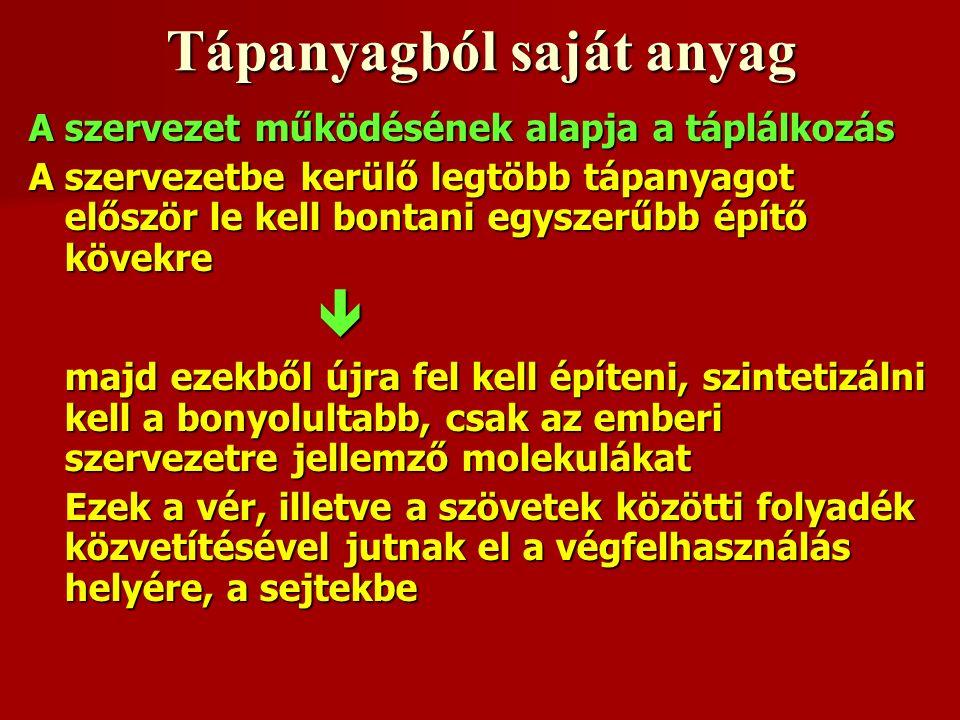 Élelmiszer Biológiai érték (%) tojásmarhahústejfehérjehalhússzójafehérjebabborsóburgonyarizs búzaliszt (83 % kiőrlésű) kukoricaföldimogyoró10010210483-928472707063535548