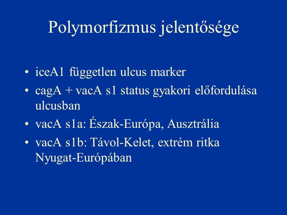 Polymorfizmus jelentősége iceA1 független ulcus marker cagA + vacA s1 status gyakori előfordulása ulcusban vacA s1a: Észak-Európa, Ausztrália vacA s1b: Távol-Kelet, extrém ritka Nyugat-Európában