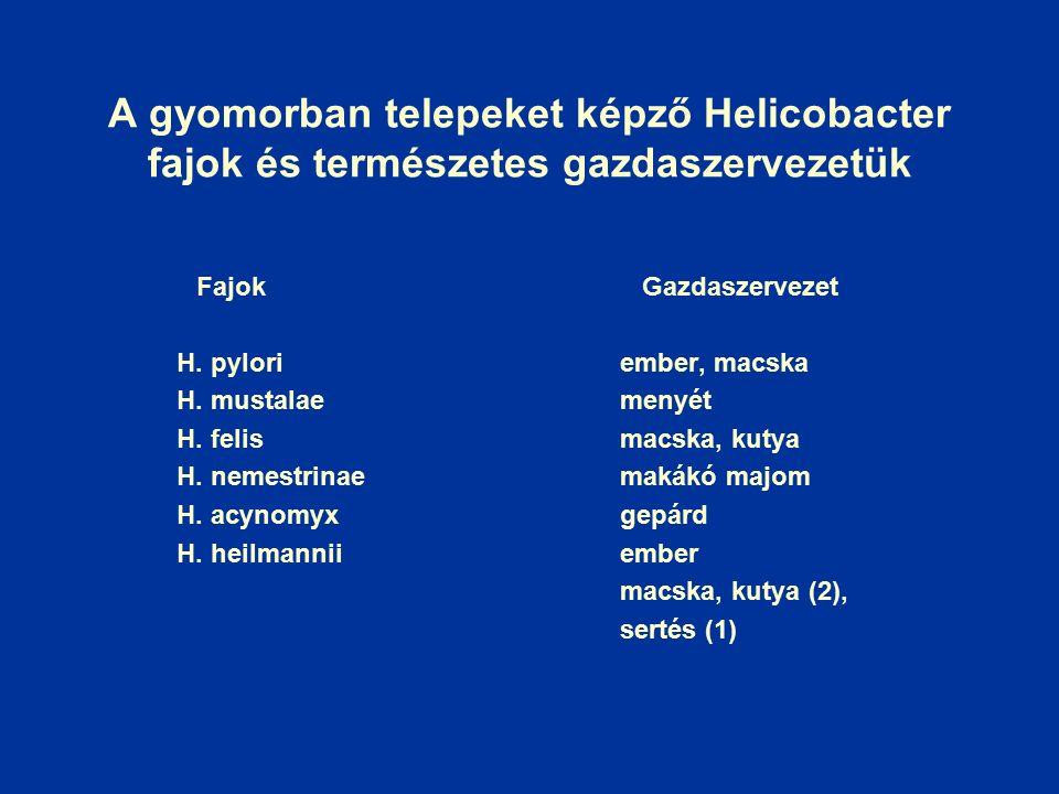 A gyomorban telepeket képző Helicobacter fajok és természetes gazdaszervezetük Fajok Gazdaszervezet H.