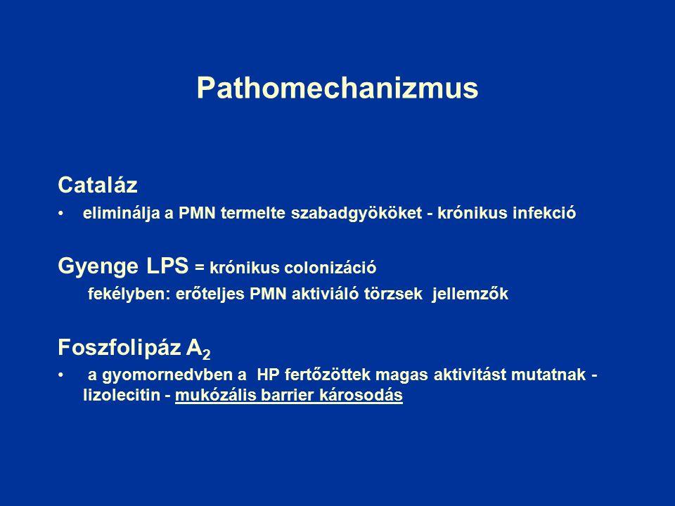 Pathomechanizmus Cataláz eliminálja a PMN termelte szabadgyököket - krónikus infekció Gyenge LPS = krónikus colonizáció fekélyben: erőteljes PMN aktiviáló törzsek jellemzők Foszfolipáz A 2 a gyomornedvben a HP fertőzöttek magas aktivitást mutatnak - lizolecitin - mukózális barrier károsodás