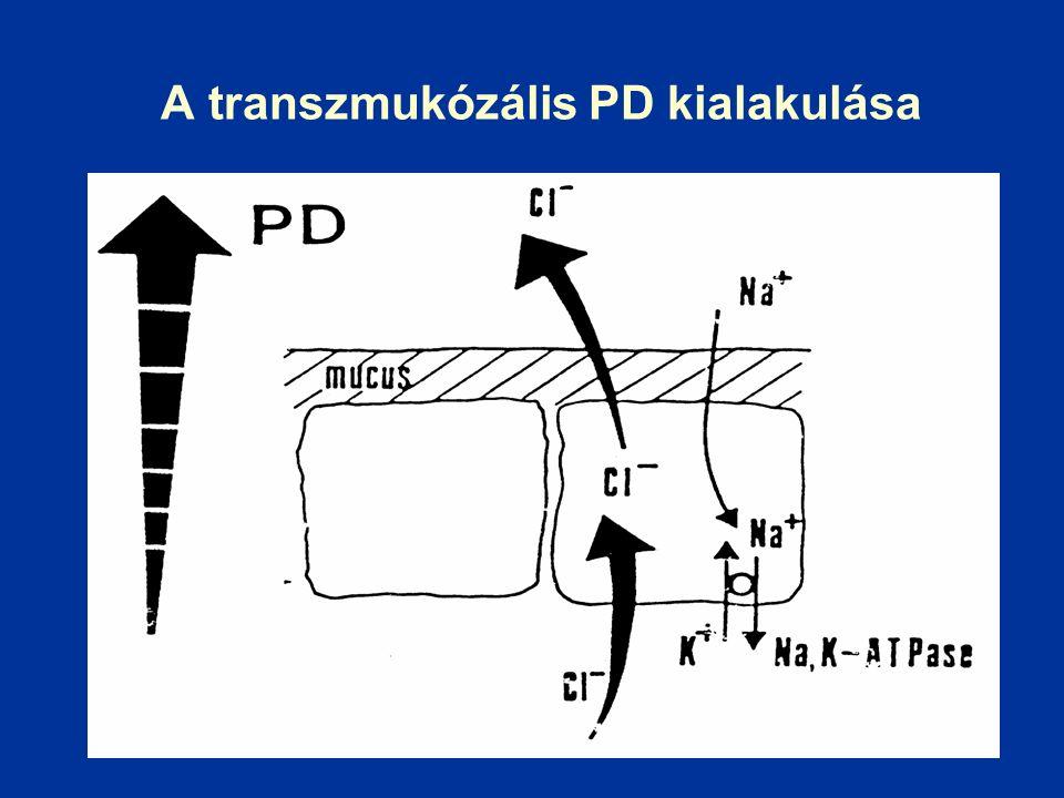 A transzmukózális PD kialakulása