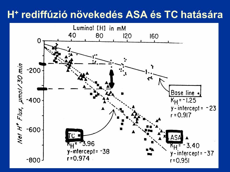 H + rediffúzió növekedés ASA és TC hatására