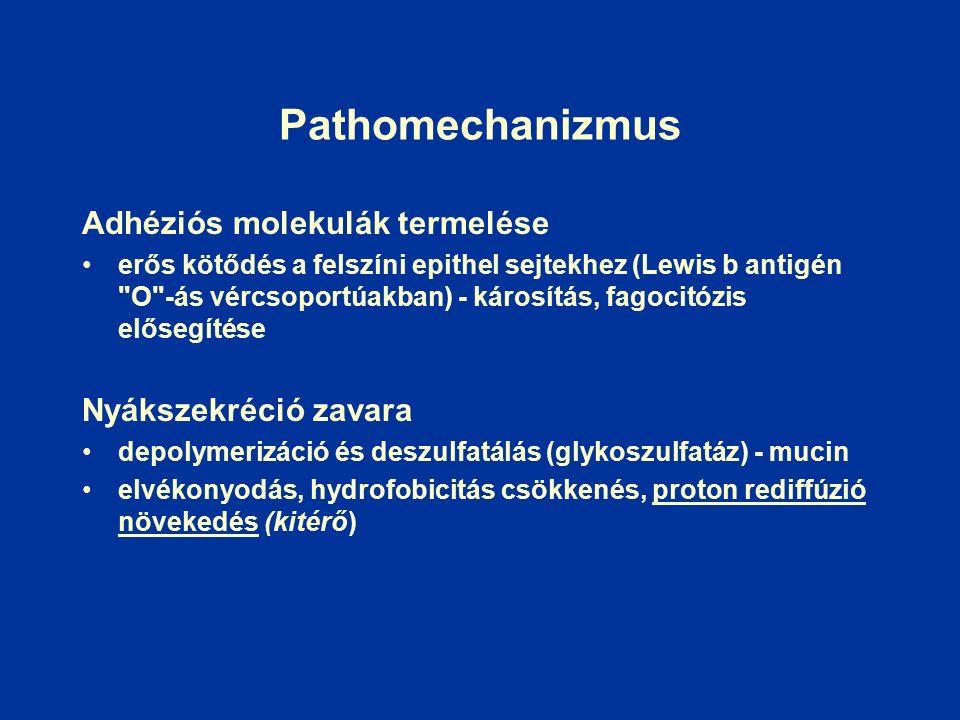 Pathomechanizmus Adhéziós molekulák termelése erős kötődés a felszíni epithel sejtekhez (Lewis b antigén O -ás vércsoportúakban) - károsítás, fagocitózis elősegítése Nyákszekréció zavara depolymerizáció és deszulfatálás (glykoszulfatáz) - mucin elvékonyodás, hydrofobicitás csökkenés, proton rediffúzió növekedés (kitérő)