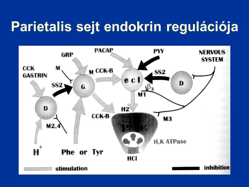 Parietalis sejt endokrin regulációja