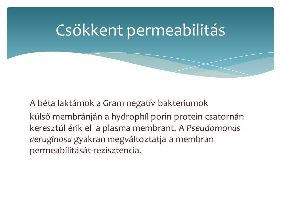 A béta laktámok a Gram negatív bakteriumok külső membránján a hydrophíl porin protein csatornán keresztül érik el a plasma membrant. A Pseudomonas aer