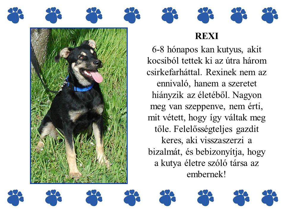 REXI 6-8 hónapos kan kutyus, akit kocsiból tettek ki az útra három csirkefarháttal.