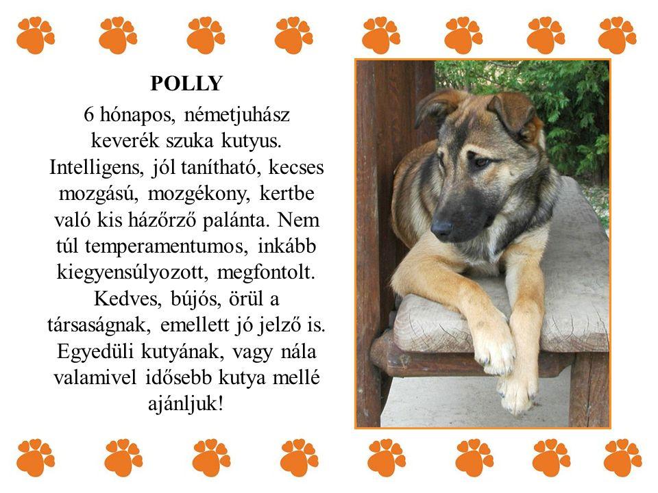 POLLY 6 hónapos, németjuhász keverék szuka kutyus. Intelligens, jól tanítható, kecses mozgású, mozgékony, kertbe való kis ház ő rz ő palánta. Nem túl