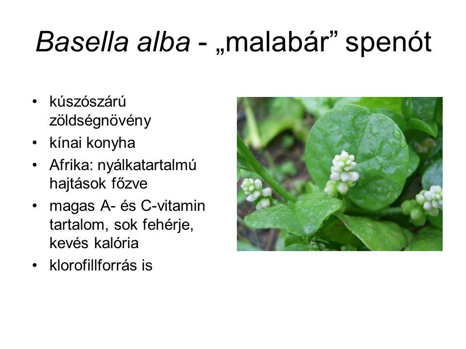 """Basella alba - """"malabár"""" spenót kúszószárú zöldségnövény kínai konyha Afrika: nyálkatartalmú hajtások főzve magas A- és C-vitamin tartalom, sok fehérj"""