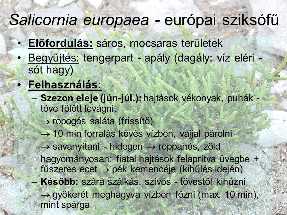 Salicornia europaea - európai sziksófű Előfordulás: sáros, mocsaras területek Begyűjtés: tengerpart - apály (dagály: víz eléri - sót hagy) Felhasználá