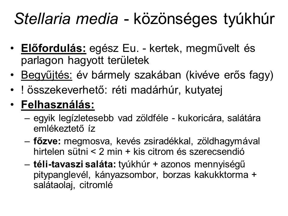 Stellaria media - közönséges tyúkhúr Előfordulás: egész Eu. - kertek, megművelt és parlagon hagyott területek Begyűjtés: év bármely szakában (kivéve e