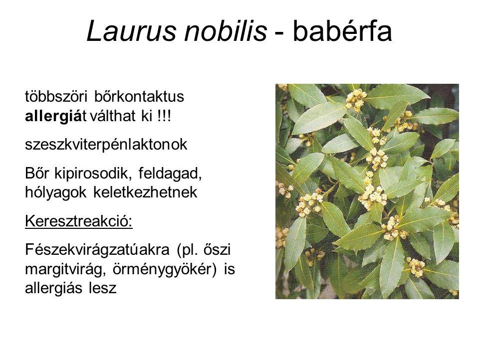 Laurus nobilis - babérfa többszöri bőrkontaktus allergiát válthat ki !!! szeszkviterpénlaktonok Bőr kipirosodik, feldagad, hólyagok keletkezhetnek Ker