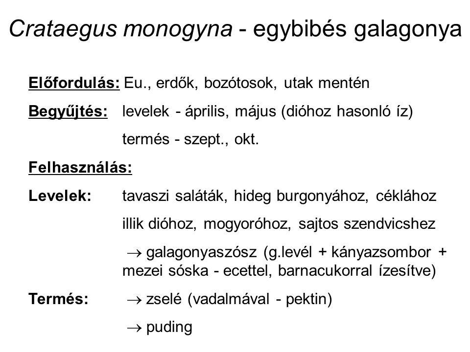 Crataegus monogyna - egybibés galagonya Előfordulás: Eu., erdők, bozótosok, utak mentén Begyűjtés:levelek - április, május (dióhoz hasonló íz) termés