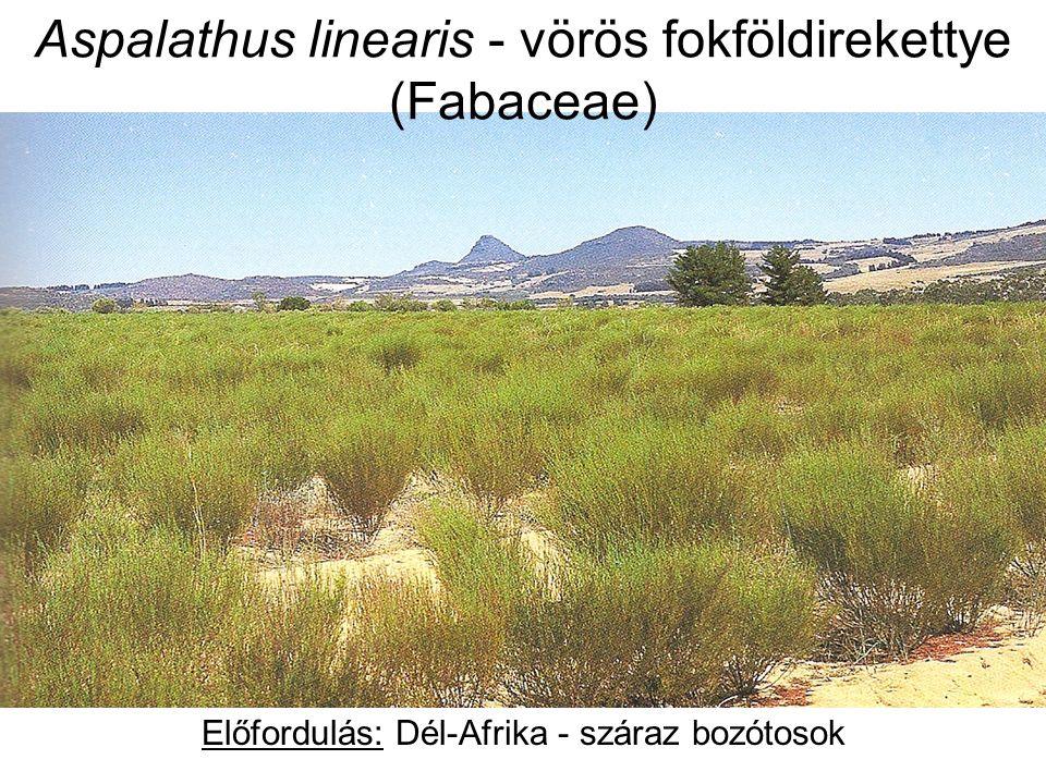 Aspalathus linearis - vörös fokföldirekettye (Fabaceae) Előfordulás: Dél-Afrika - száraz bozótosok