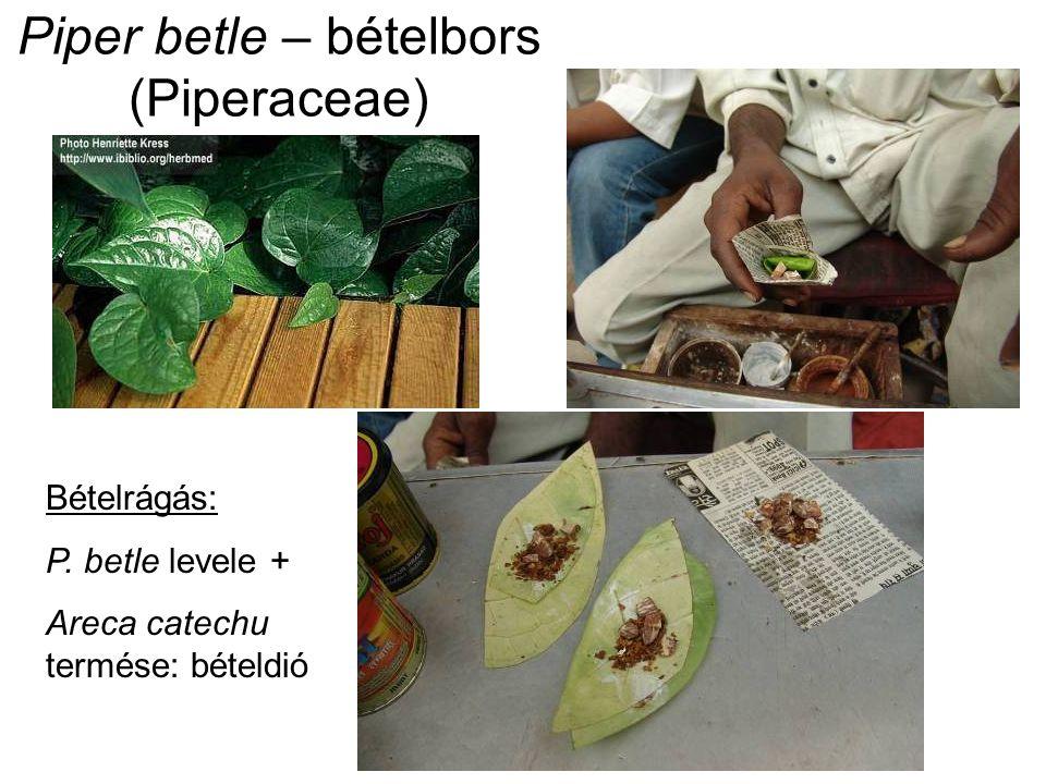 Piper betle – bételbors (Piperaceae) Bételrágás: P. betle levele + Areca catechu termése: bételdió