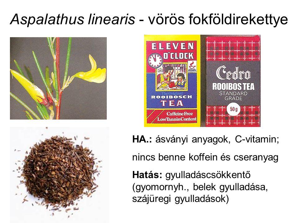 Aspalathus linearis - vörös fokföldirekettye HA.: ásványi anyagok, C-vitamin; nincs benne koffein és cseranyag Hatás: gyulladáscsökkentő (gyomornyh.,