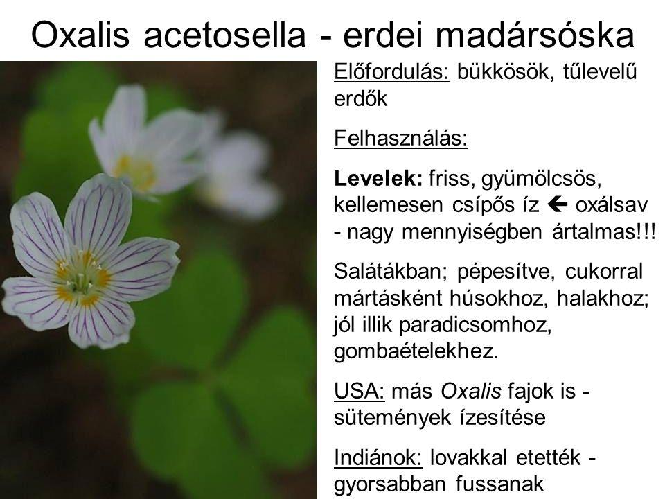 Oxalis acetosella - erdei madársóska Előfordulás: bükkösök, tűlevelű erdők Felhasználás: Levelek: friss, gyümölcsös, kellemesen csípős íz  oxálsav -