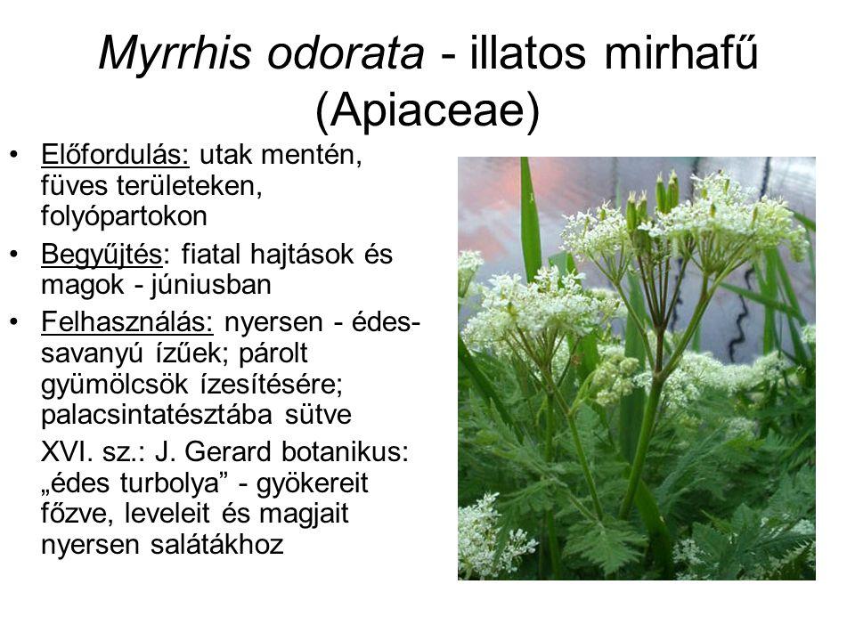 Myrrhis odorata - illatos mirhafű (Apiaceae) Előfordulás: utak mentén, füves területeken, folyópartokon Begyűjtés: fiatal hajtások és magok - júniusba