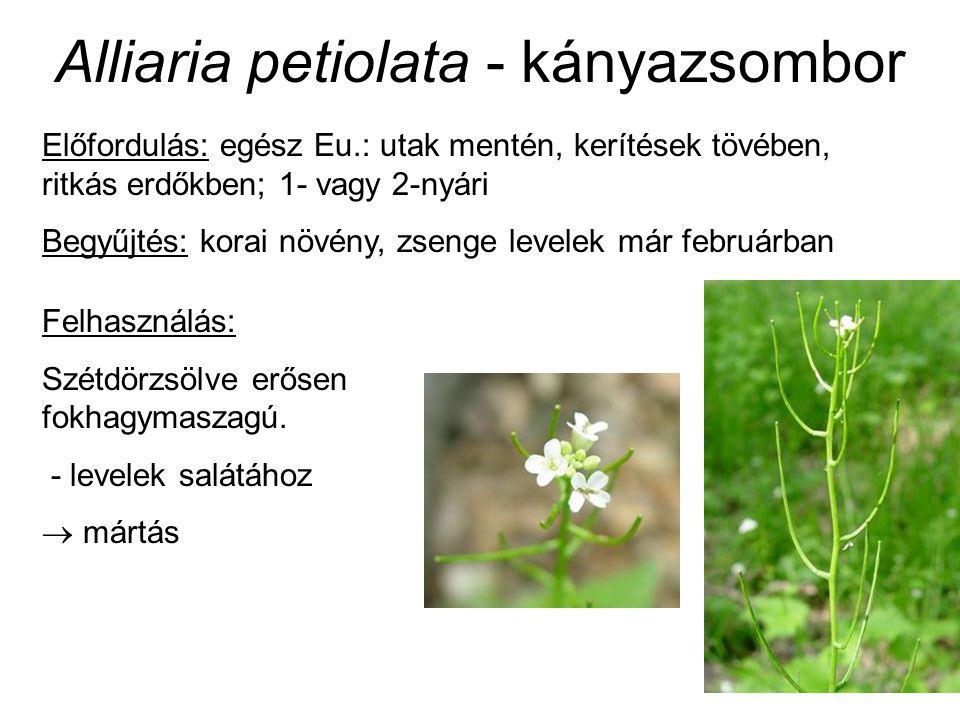 Előfordulás: egész Eu.: utak mentén, kerítések tövében, ritkás erdőkben; 1- vagy 2-nyári Begyűjtés: korai növény, zsenge levelek már februárban Felhas