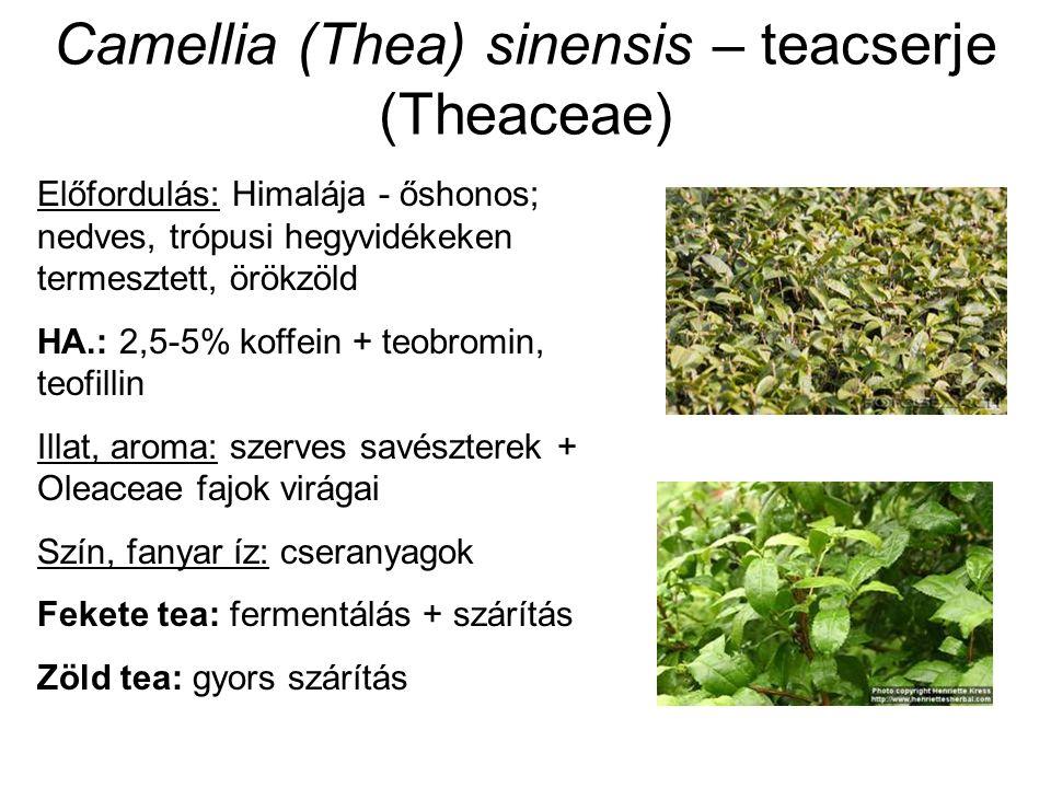 Camellia (Thea) sinensis – teacserje (Theaceae) Előfordulás: Himalája - őshonos; nedves, trópusi hegyvidékeken termesztett, örökzöld HA.: 2,5-5% koffe