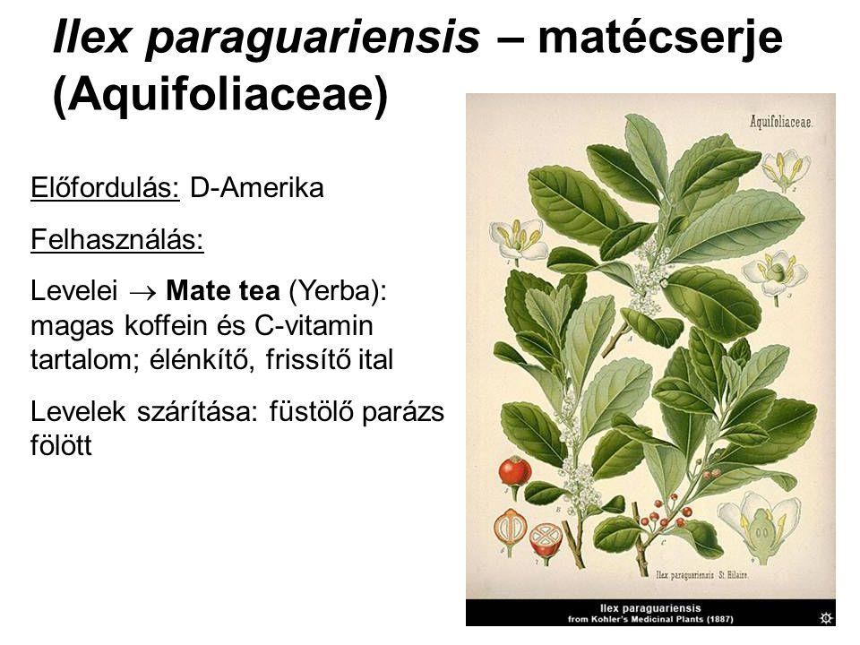 Ilex paraguariensis – matécserje (Aquifoliaceae) Előfordulás: D-Amerika Felhasználás: Levelei  Mate tea (Yerba): magas koffein és C-vitamin tartalom;