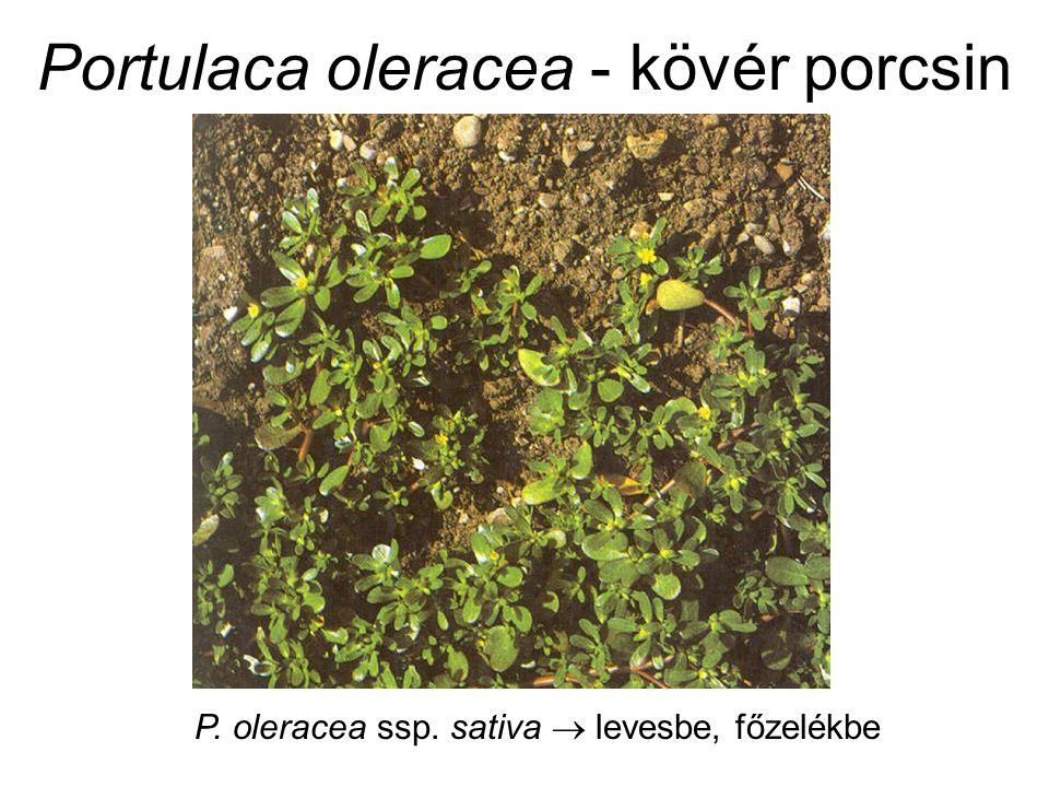 Borago officinalis - kerti borágó (Boraginaceae) Felhasználás: Levele, hajtása: fűszer (savanyúságok) Virág: díszítő (pl.