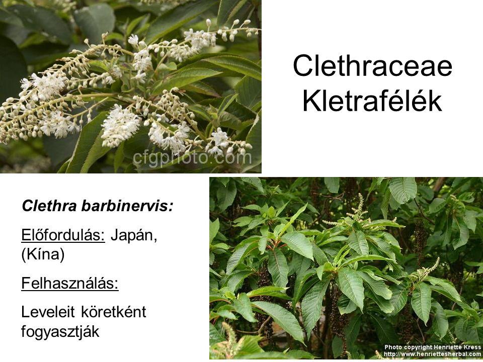 Clethraceae Kletrafélék Clethra barbinervis: Előfordulás: Japán, (Kína) Felhasználás: Leveleit köretként fogyasztják
