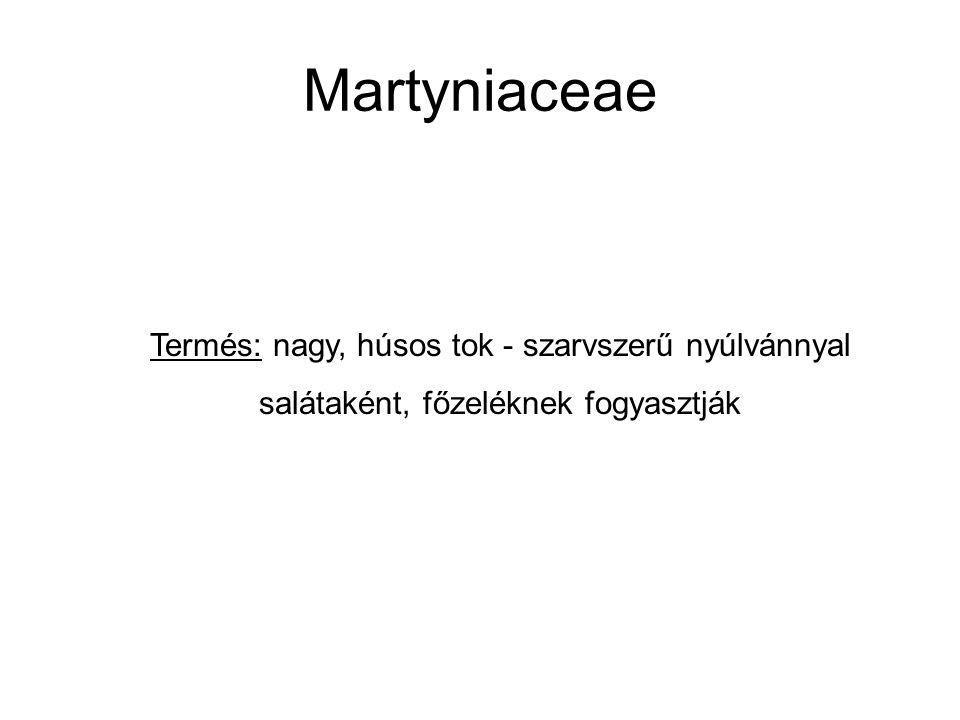 Martyniaceae Termés: nagy, húsos tok - szarvszerű nyúlvánnyal salátaként, főzeléknek fogyasztják