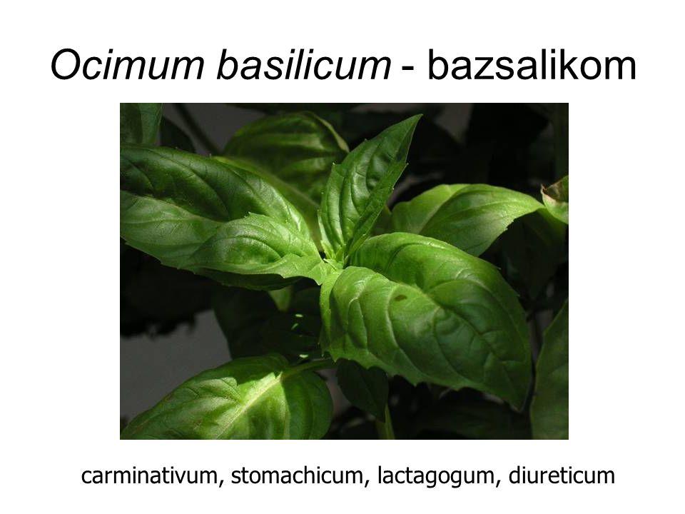 Ocimum basilicum - bazsalikom carminativum, stomachicum, lactagogum, diureticum