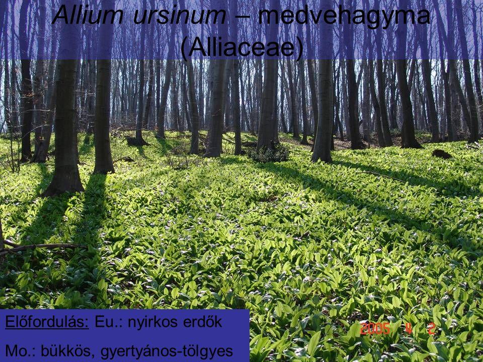 Allium ursinum – medvehagyma (Alliaceae) Előfordulás: Eu.: nyirkos erdők Mo.: bükkös, gyertyános-tölgyes