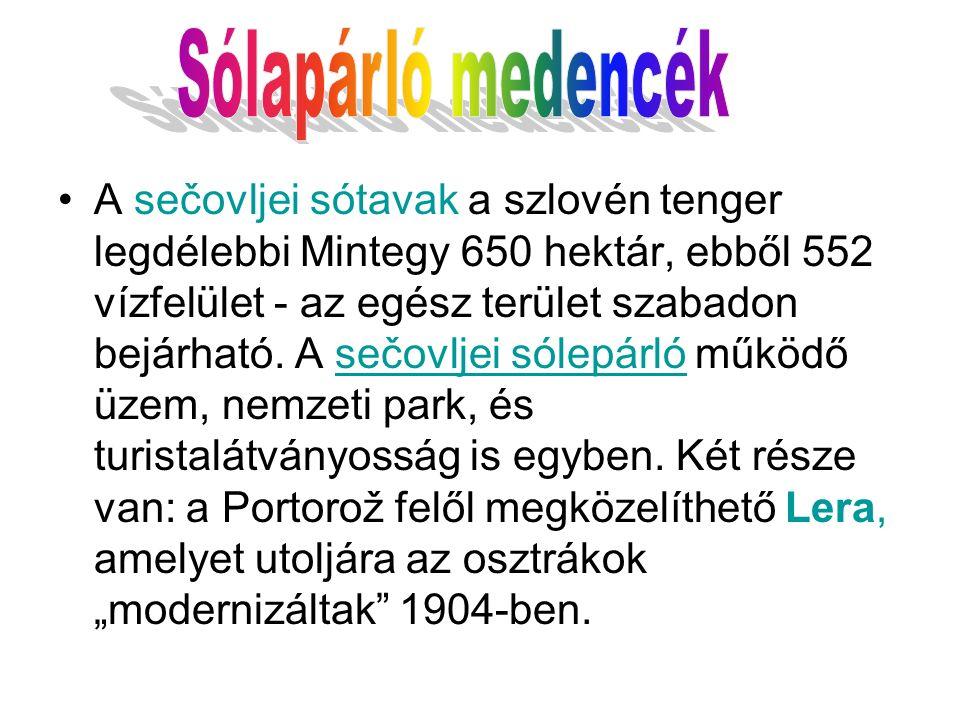 A sečovljei sótavak a szlovén tenger legdélebbi Mintegy 650 hektár, ebből 552 vízfelület - az egész terület szabadon bejárható.