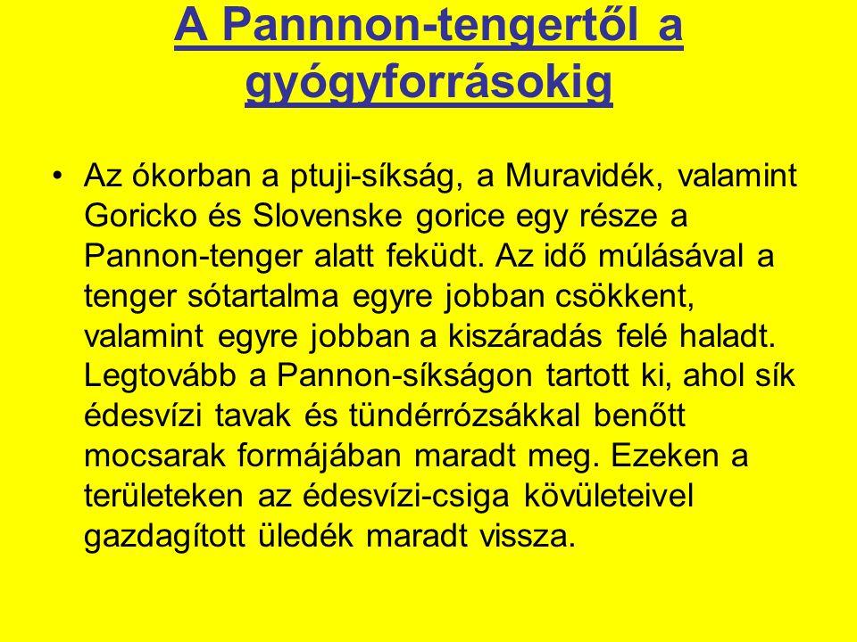 A Pannnon-tengertől a gyógyforrásokig Az ókorban a ptuji-síkság, a Muravidék, valamint Goricko és Slovenske gorice egy része a Pannon-tenger alatt feküdt.