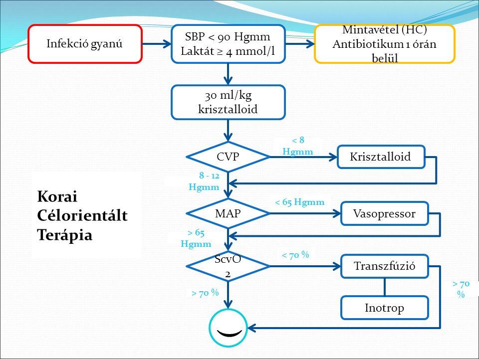 ( Infekció gyanú SBP < 90 Hgmm Laktát ≥ 4 mmol/l Mintavétel (HC) Antibiotikum 1 órán belül 30 ml/kg krisztalloid CVP MAP ScvO 2 Krisztalloid Vasopressor Transzfúzió Inotrop < 8 Hgmm 8 - 12 Hgmm < 70 % > 70 % < 65 Hgmm > 65 Hgmm Korai Célorientált Terápia