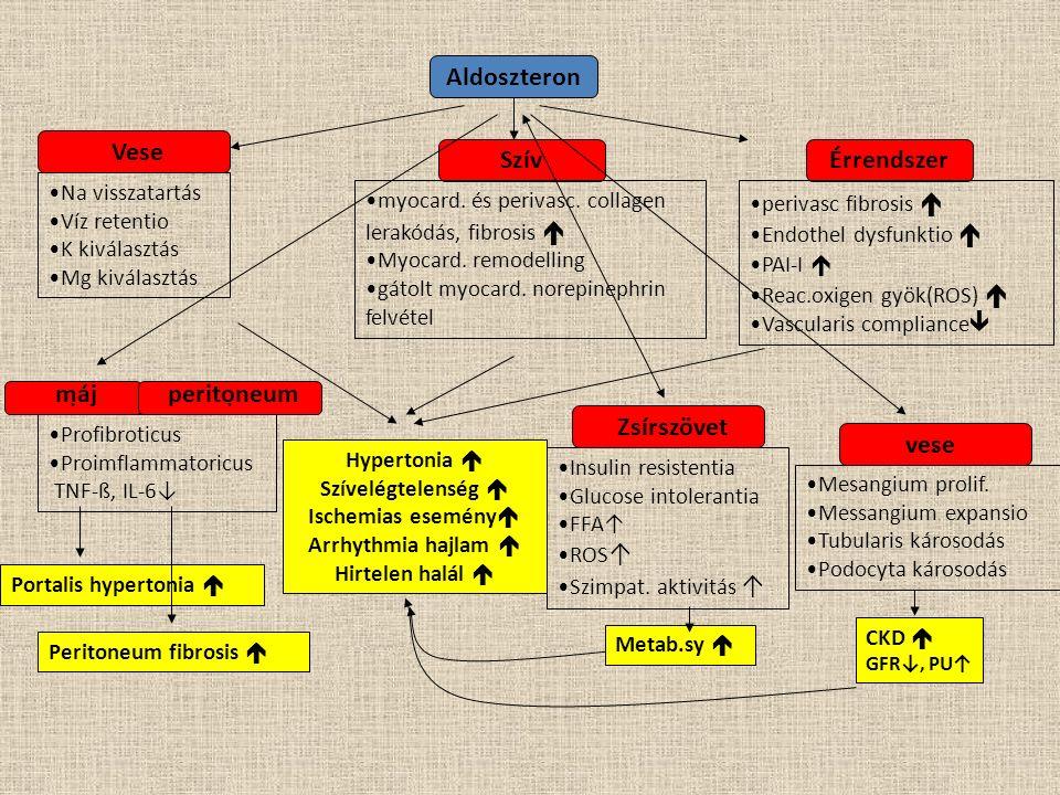 Aldoszteron. Na visszatartás Víz retentio K kiválasztás Mg kiválasztás Vese Szív myocard. és perivasc. collagen lerakódás, fibrosis  Myocard. remodel