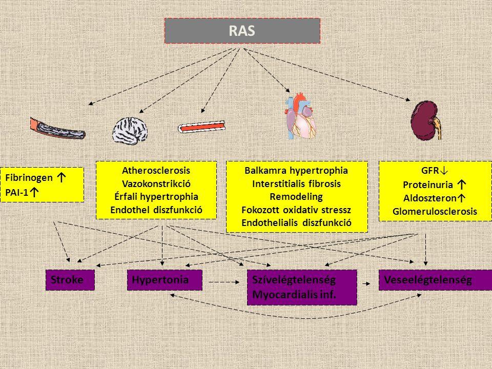 Fibrinogen ↑ PAI-1 ↑ Atherosclerosis Vazokonstrikció Érfali hypertrophia Endothel diszfunkció Balkamra hypertrophia Interstitialis fibrosis Remodeling