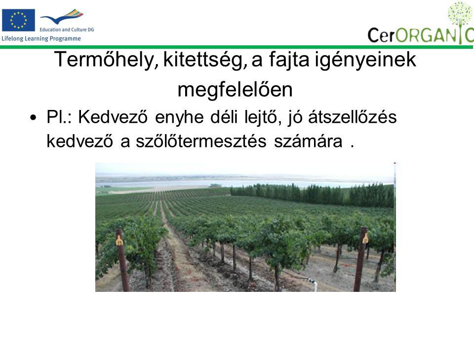 Termőhely, kitettség, a fajta igényeinek megfelelően Pl.: Kedvező enyhe déli lejtő, jó átszellőzés kedvező a szőlőtermesztés számára.