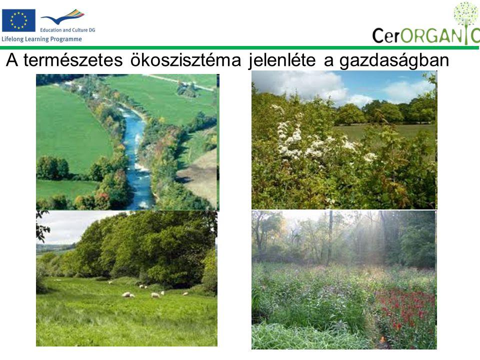 A természetes ökoszisztéma jelenléte a gazdaságban