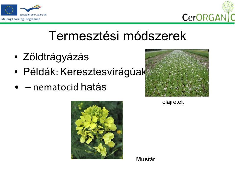 Termesztési módszerek Zöldtrágyázás Példák : Keresztesvirágúak – nematocid hatás olajretek Mustár