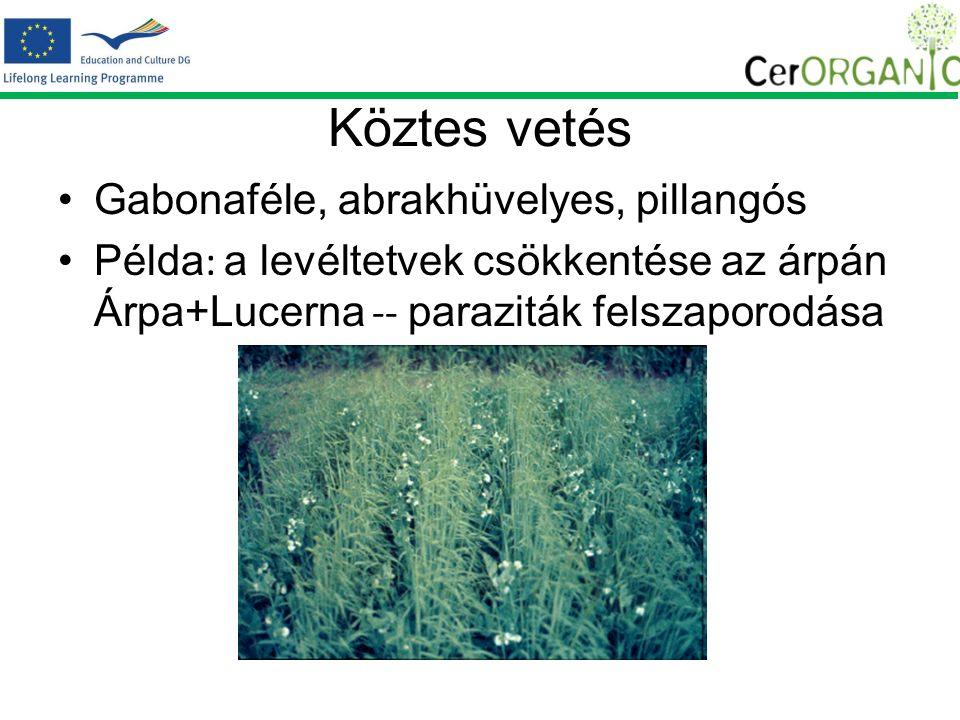 Köztes vetés Gabonaféle, abrakhüvelyes, pillangós Példa : a levéltetvek csökkentése az árpán Árpa+Lucerna -- paraziták felszaporodása