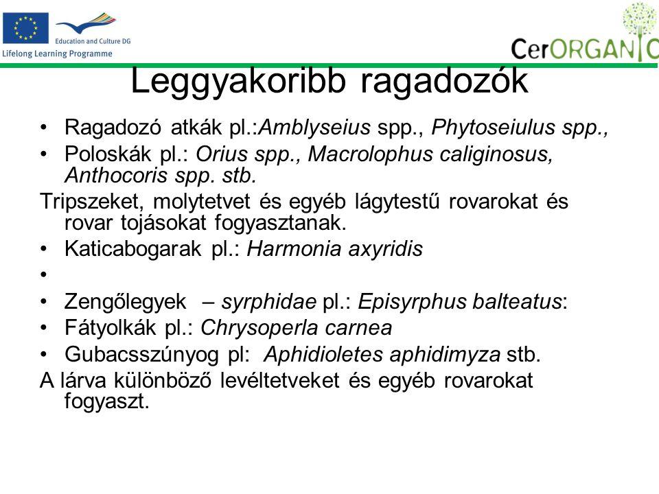 Leggyakoribb ragadozók Ragadozó atkák pl.:Amblyseius spp., Phytoseiulus spp., Poloskák pl.: Orius spp., Macrolophus caliginosus, Anthocoris spp.